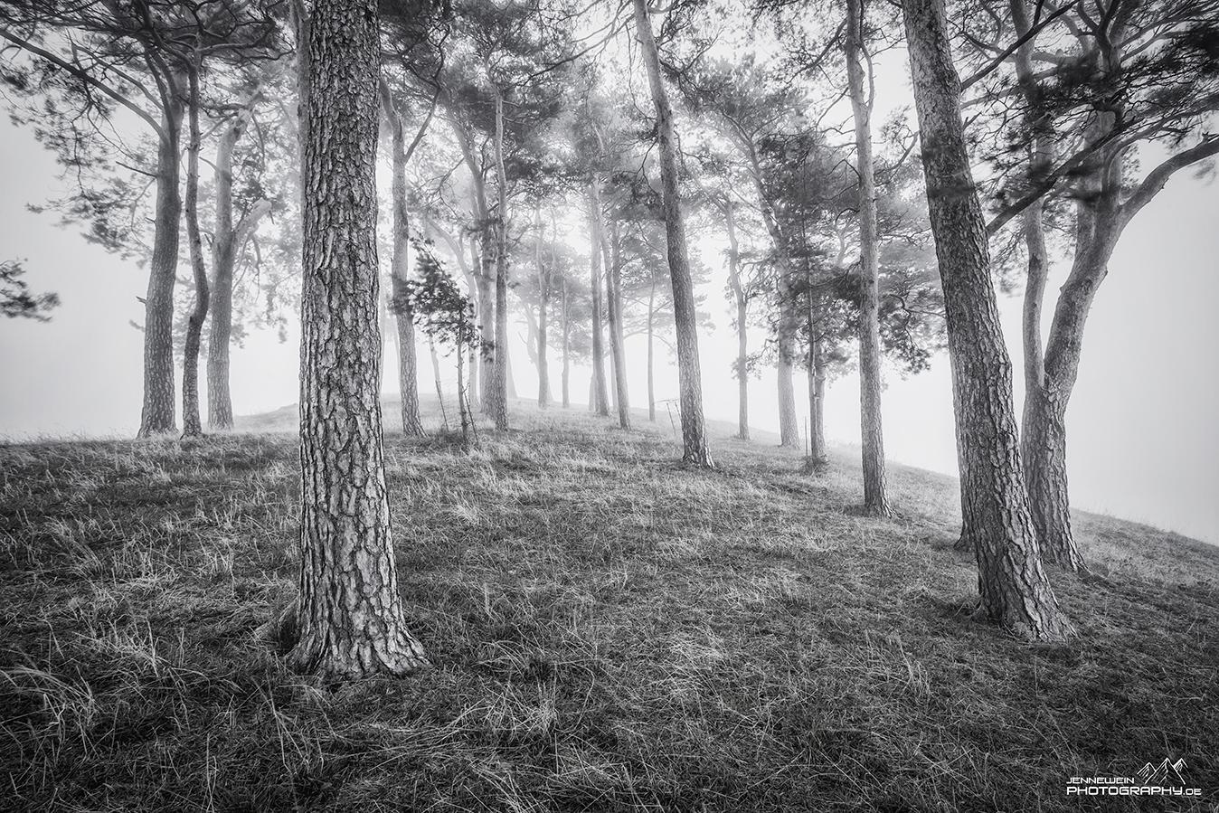 Mystischer Nebelmorgen