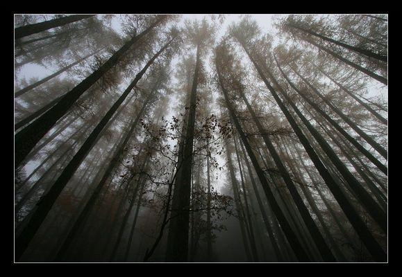 Mystischer Nebelwald 2