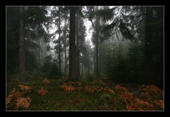 Mystischer Nebelwald 3