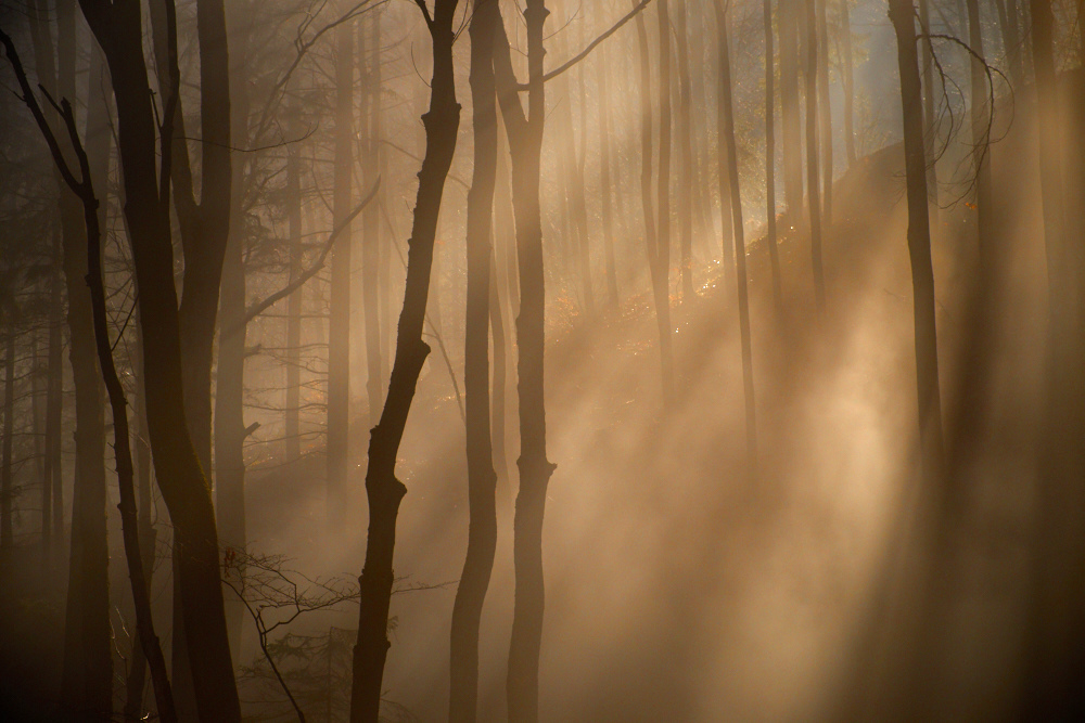 Mystischer Wienerwald