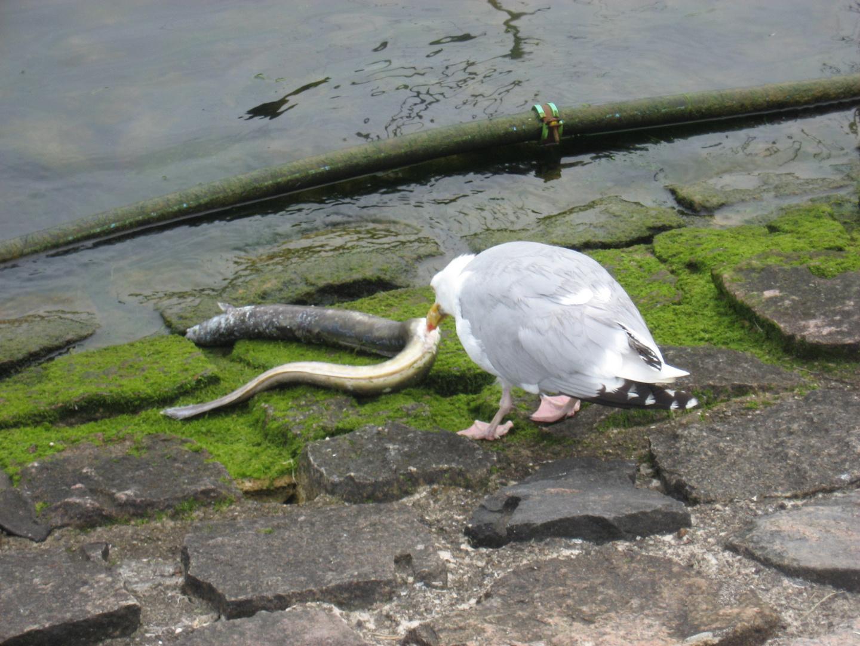 Na dat is aber ma´ ´en grosser Wurm !!!