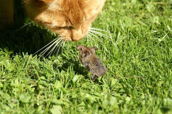 Na, Du kleine Maus, was suchst Du in meinem Garten