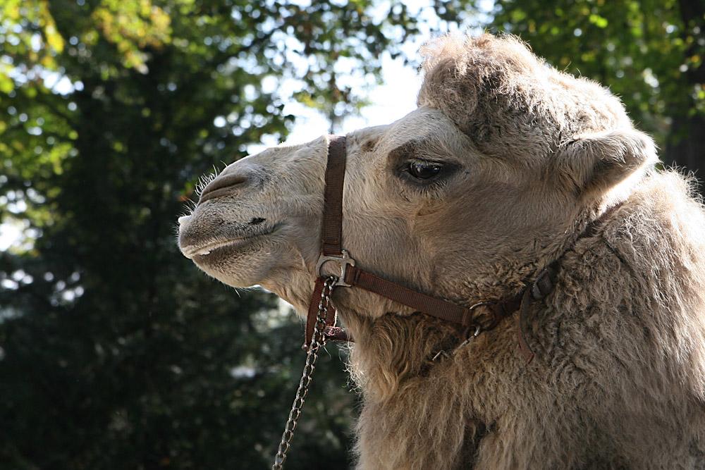 na sag ruhig ich sei ein Kamel