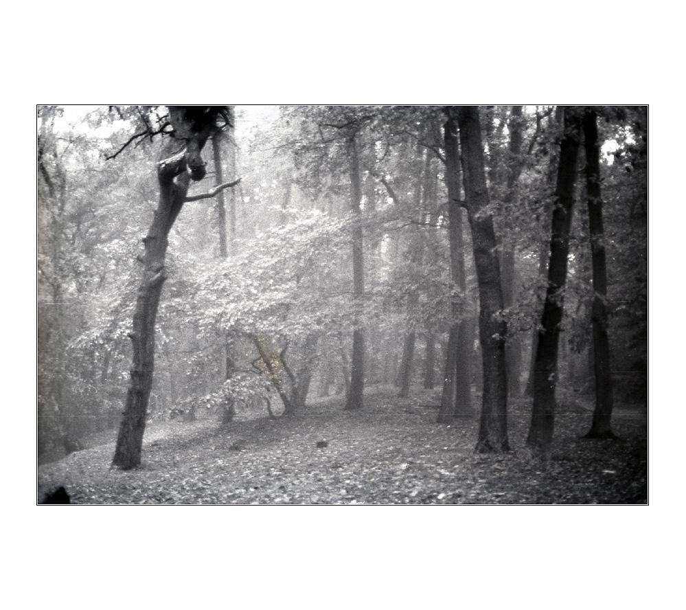 na und? geh ich halt innen Wald und werd wild