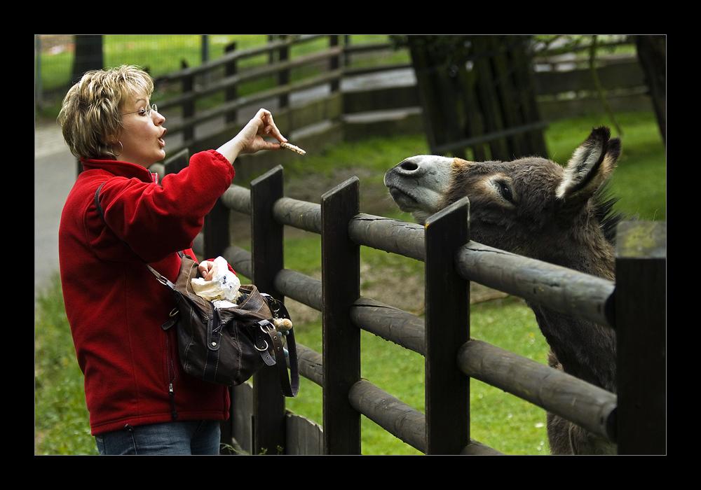 na, wo ist denn der Esel... :-)
