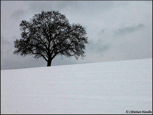 Nach ausgiebigen Schneefällten... 2