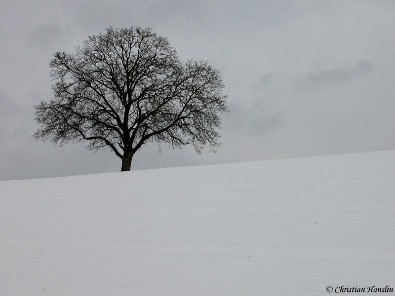 Nach ausgiebigen Schneefällten...