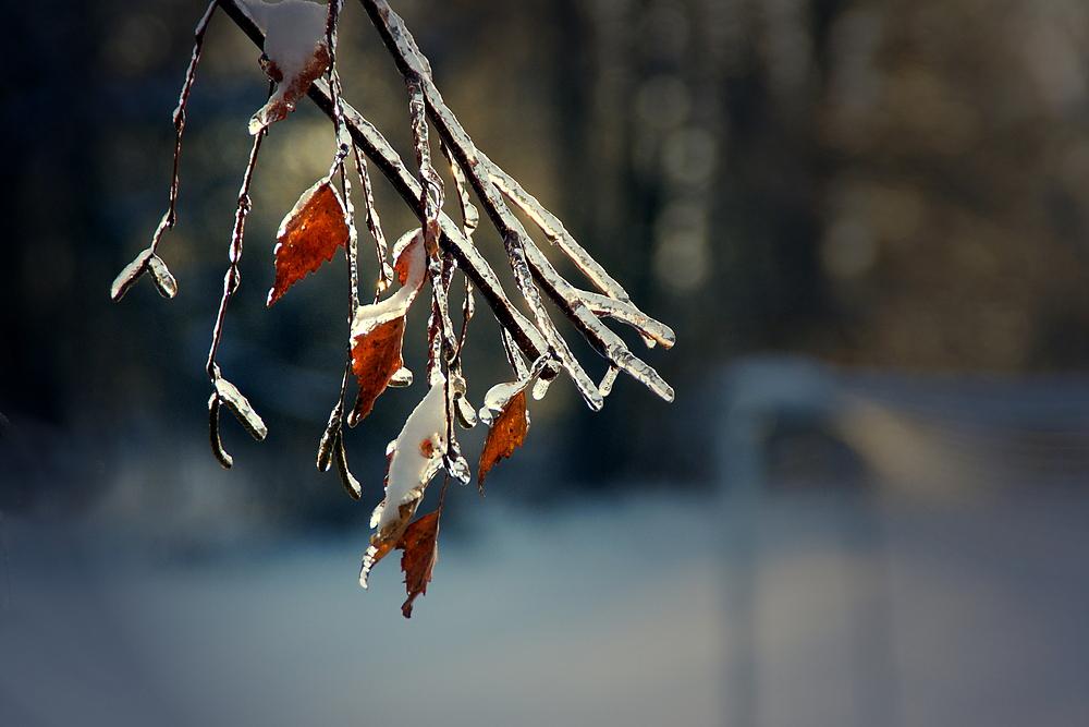 Nach dem Eisregen ..