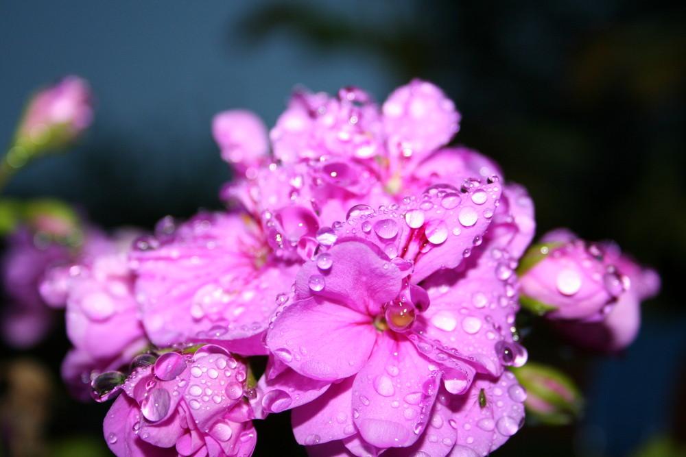nach dem Frühlingsregen...