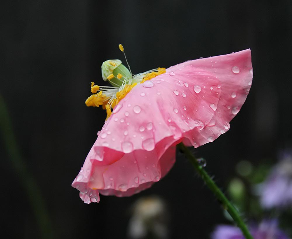 .....nach dem Regen 1