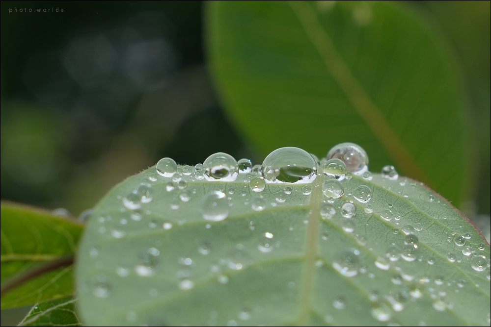 Nach dem Regen #3