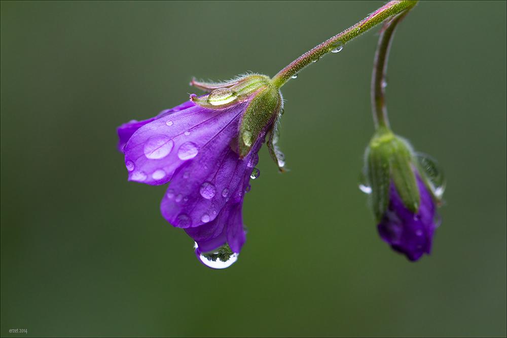Nach dem Regen....