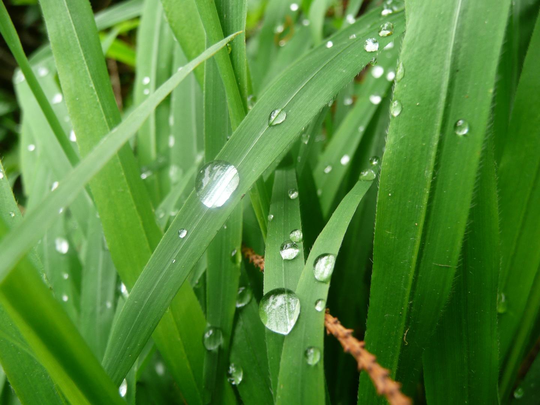Nach dem Regen.....