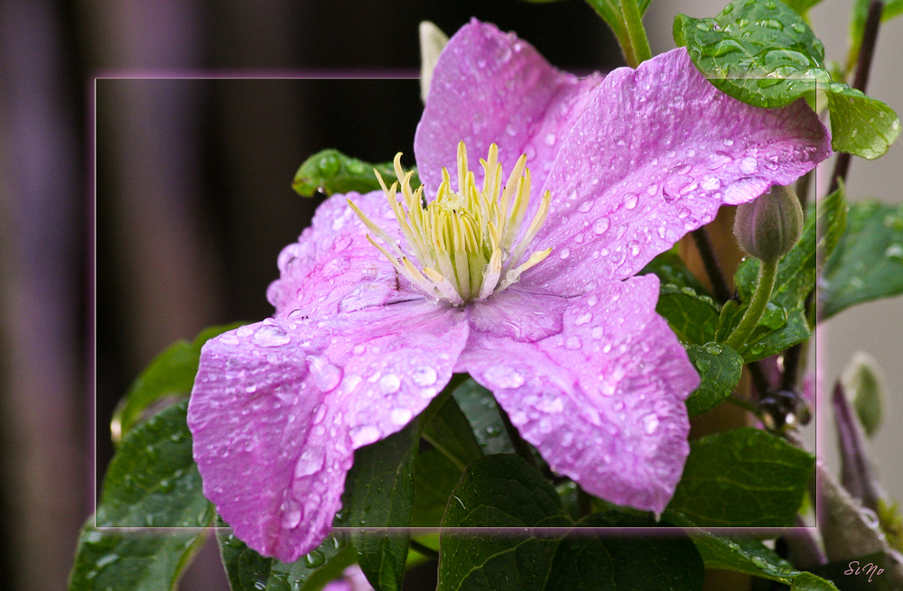 Nach dem Regen ...