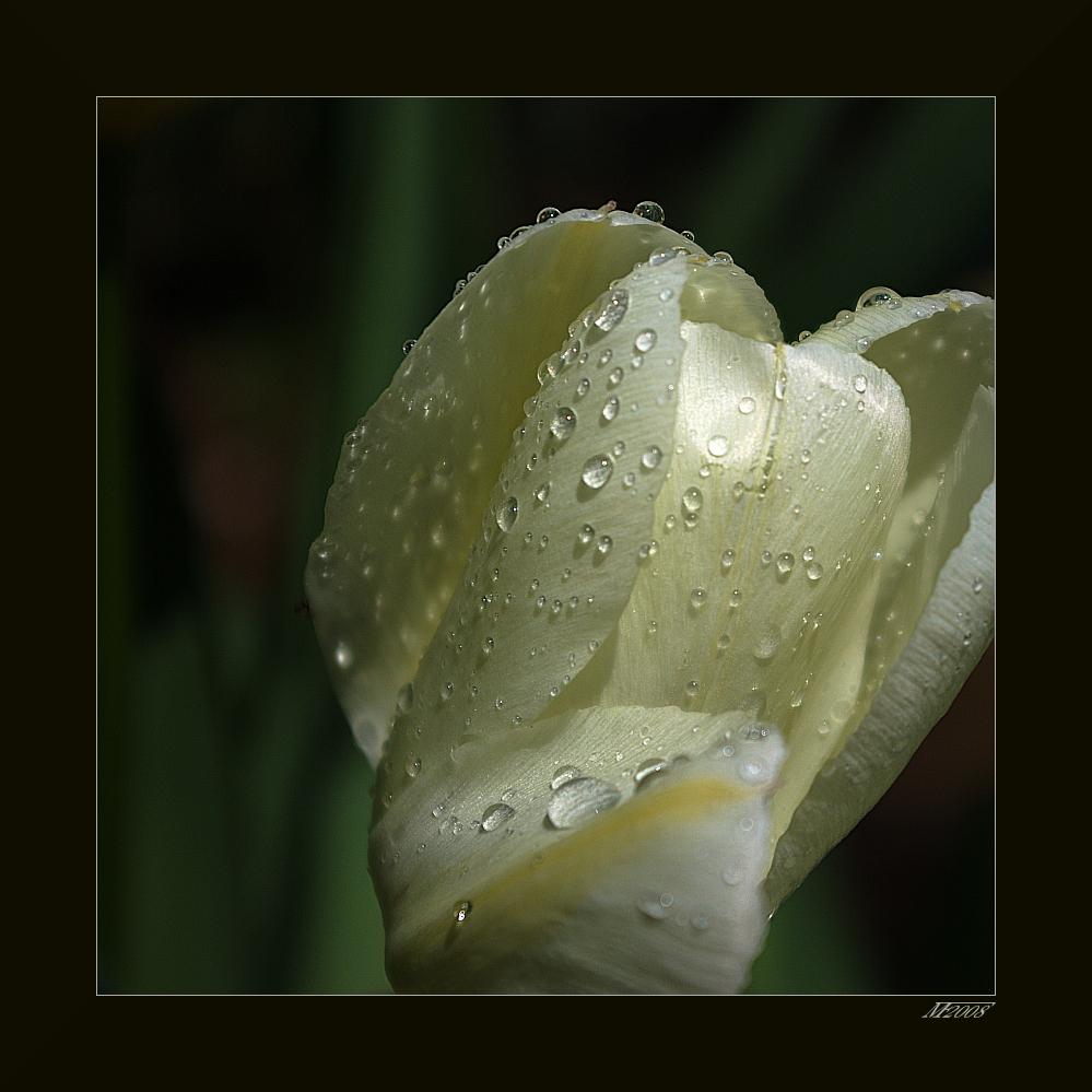 nach dem Regen / after the rain
