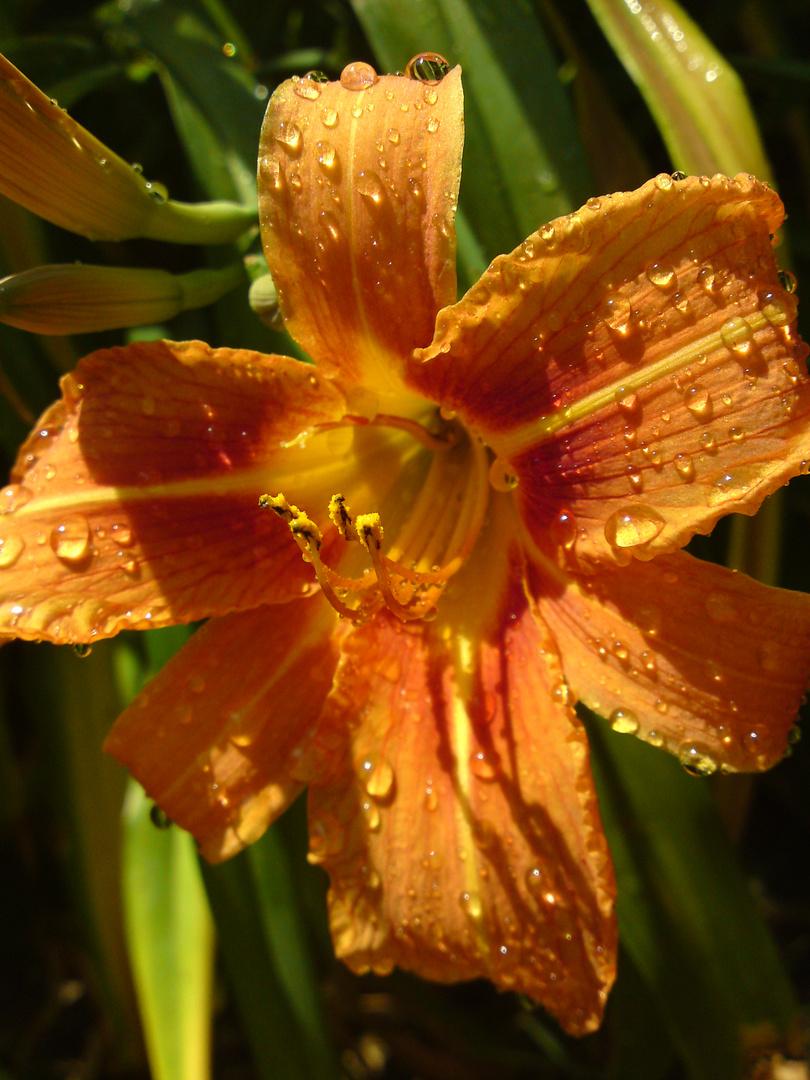 nach dem Sommerregen
