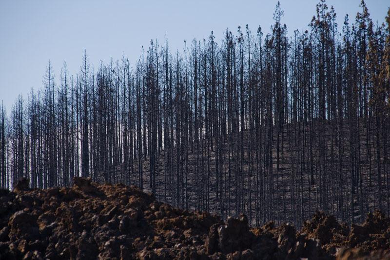 nach dem Waldbrand auf Teneriffa