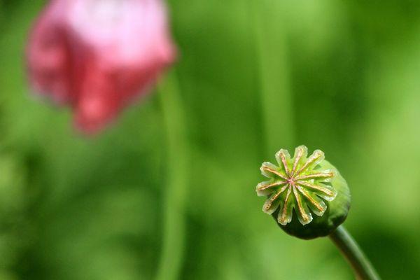 Nach der Blüte