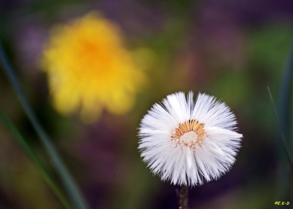 nach der Blüte...