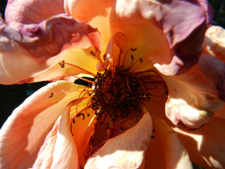 Nach der Blütezeit