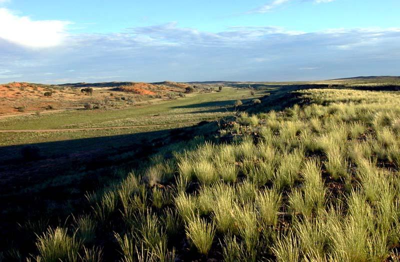 Nach der Regenzeit in der Kalahari