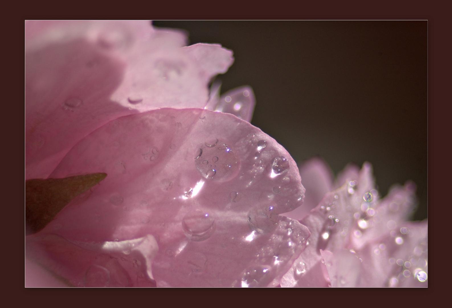 nach jeden Regen folgt auch die Sonne