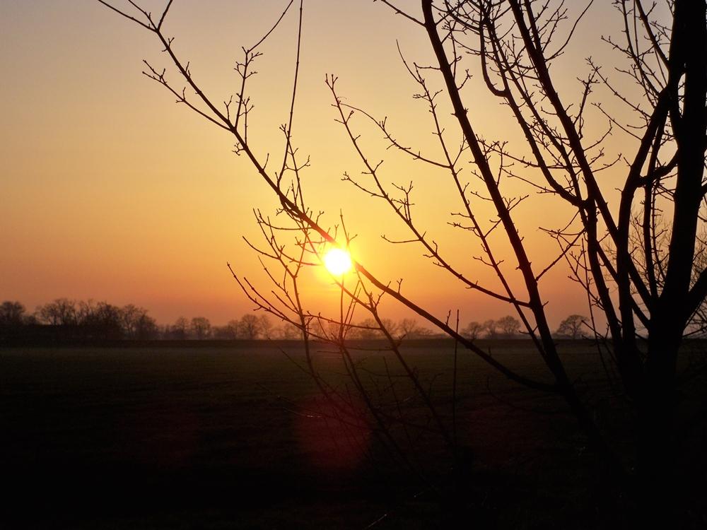Nach langen dunklen Wochen, scheint sich der Frühling seinen Weg zu uns zu bahnen.