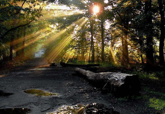 Nach Regen kommt Sonne