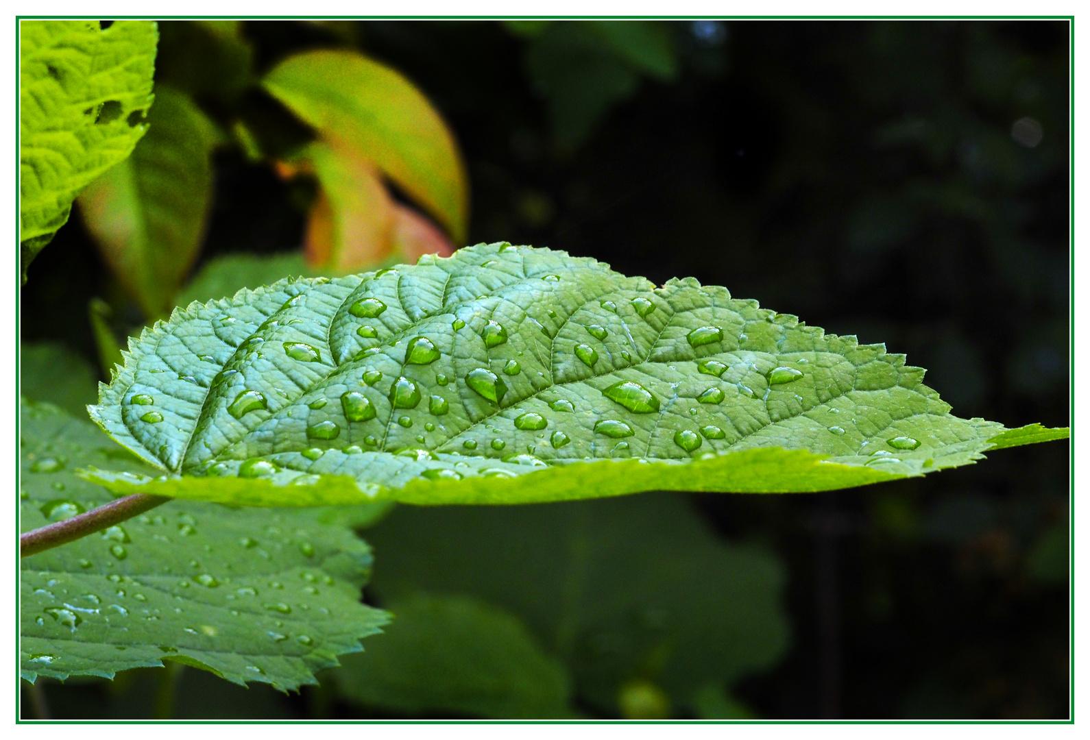 Nach Regen noch feucht