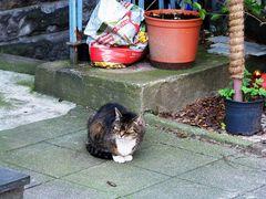 Nachbar Katze