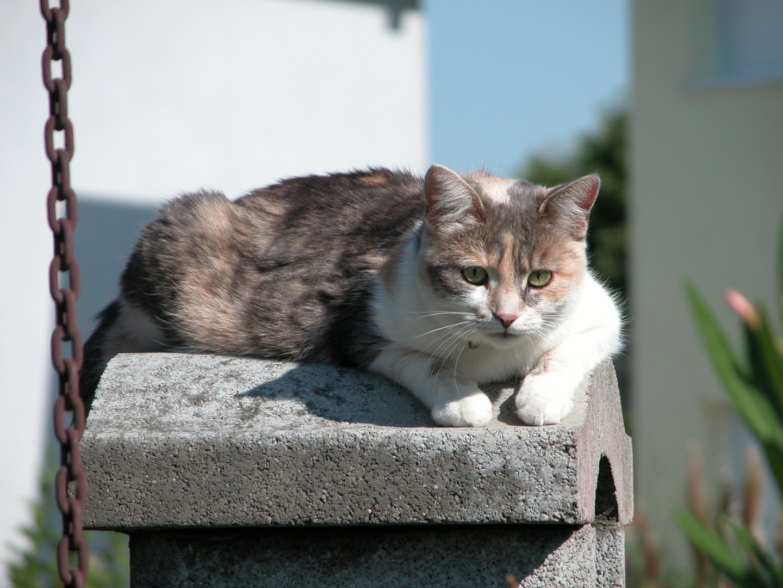 Nachbarkatze