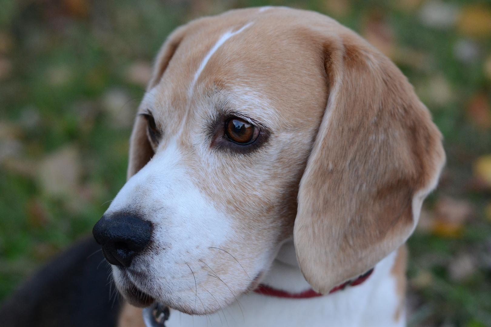 Nachbars Hund: Eddy