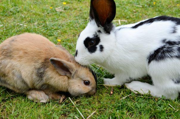 Nachbars Kaninchen :)