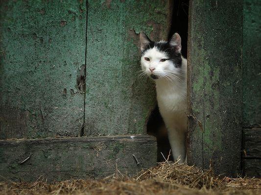 Nachbars Kater...