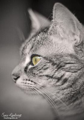 Nachbars Katz'