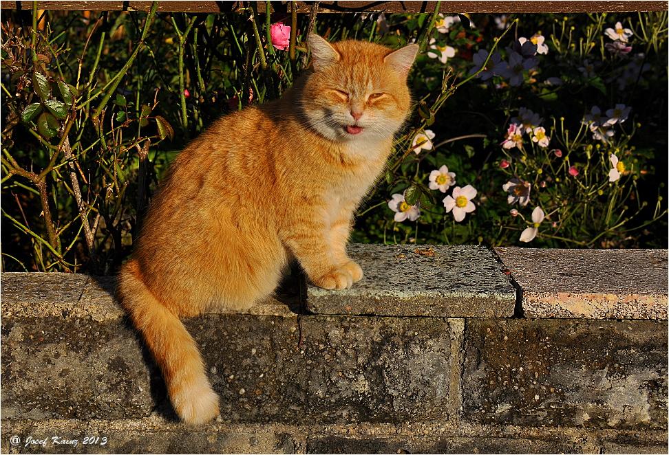 """Nachbar""""s Katz"""