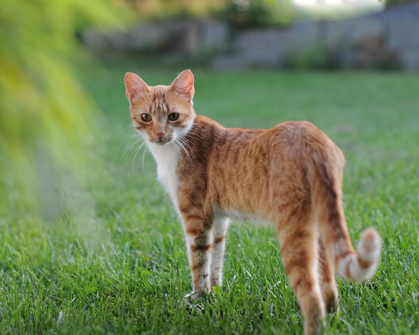 Nachbar's Katze 2