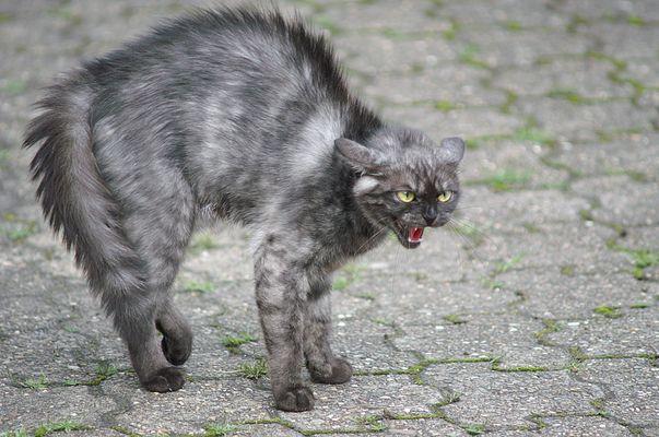 Nachbar`s Katze