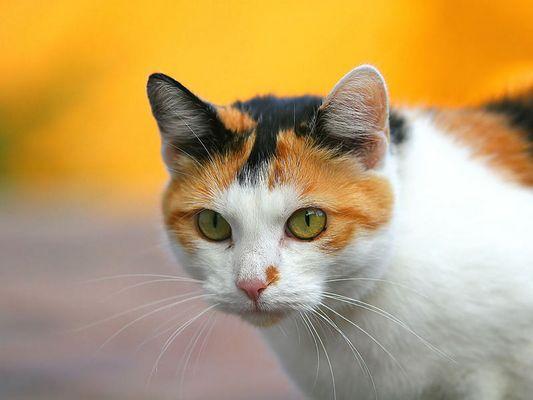 Nachbar´s Katze