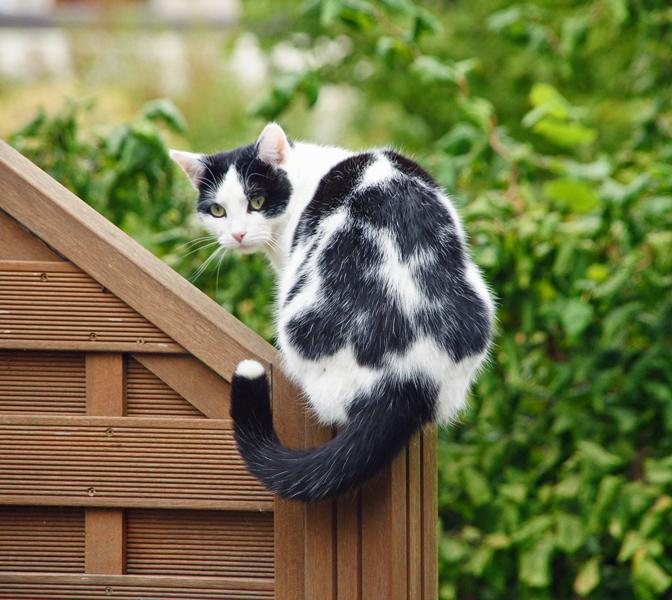 Nachbars Katze...