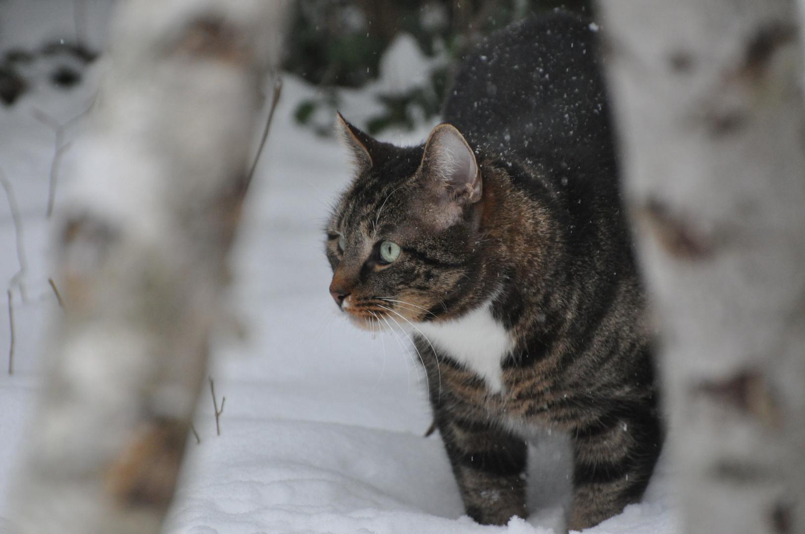 Nachbars Katze auf der Pirsch