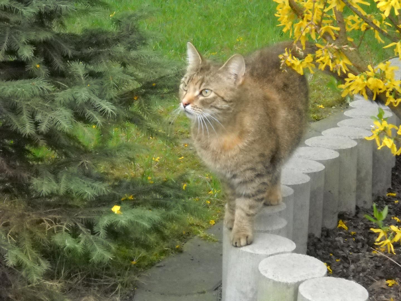 Nachbars Katze auf Streifzug