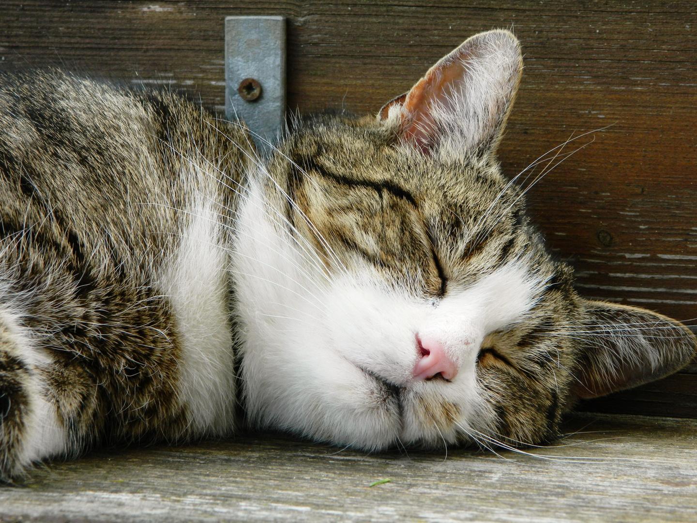 "Nachbar´s Katze "" Felix """