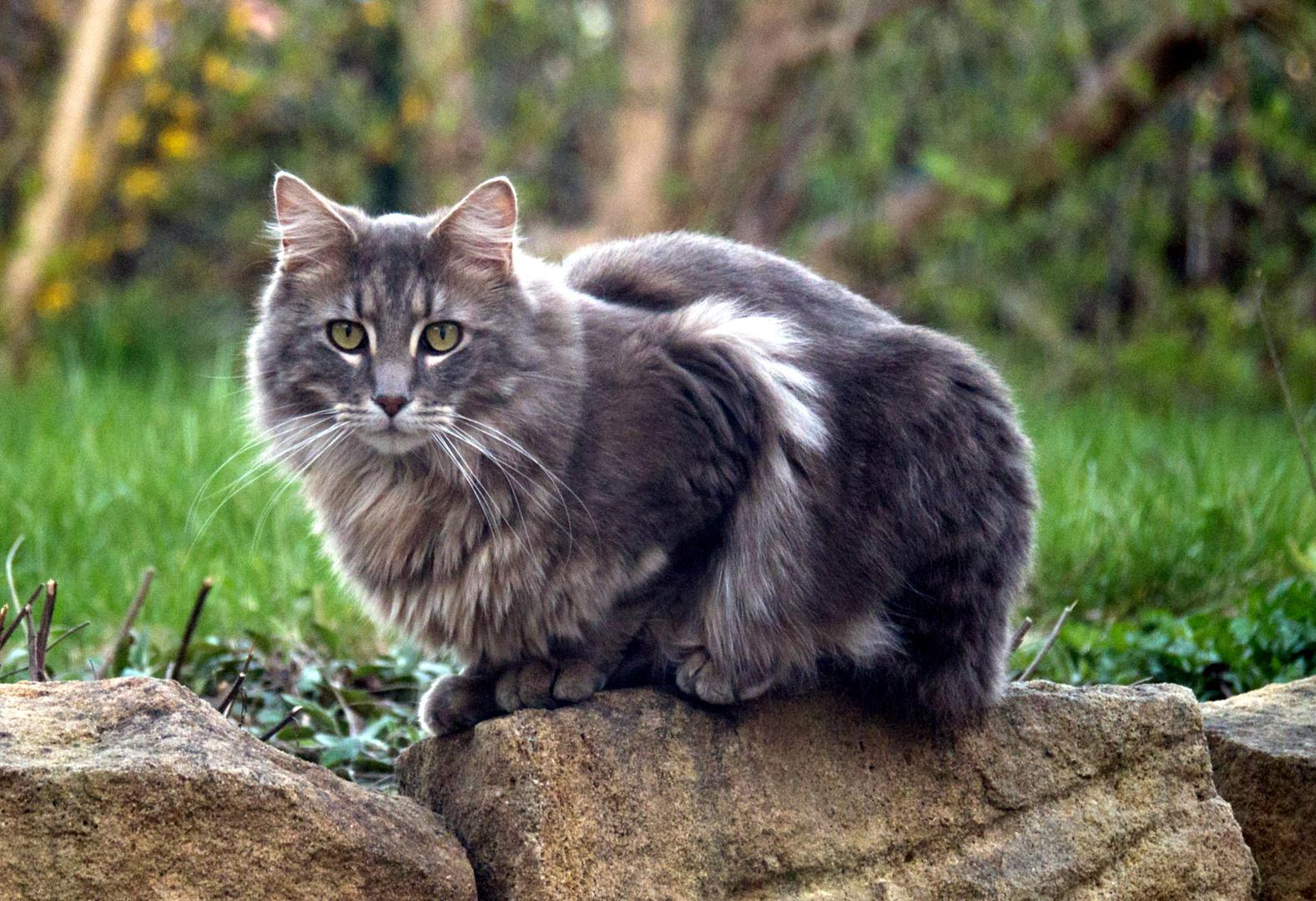Nachbars Katze (I)