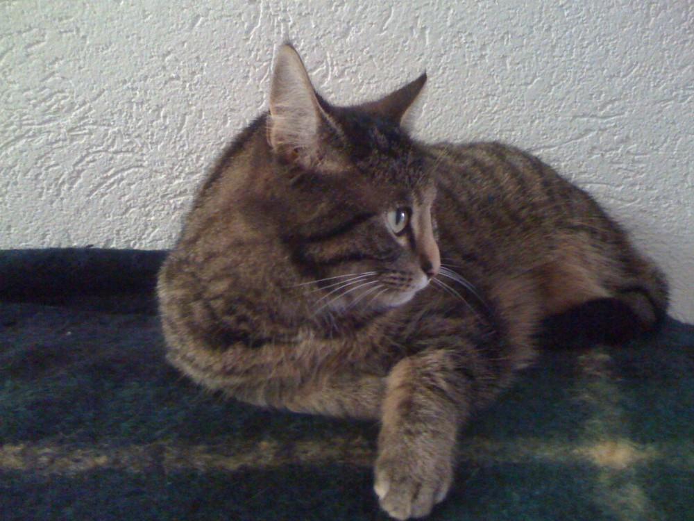 Nachbars Katze Maja