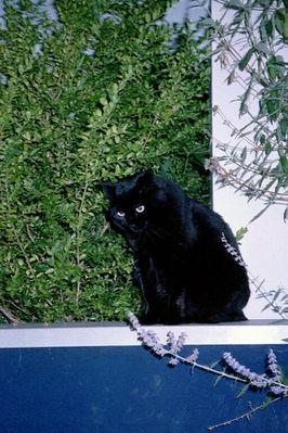 Nachbars-Katze Rocky