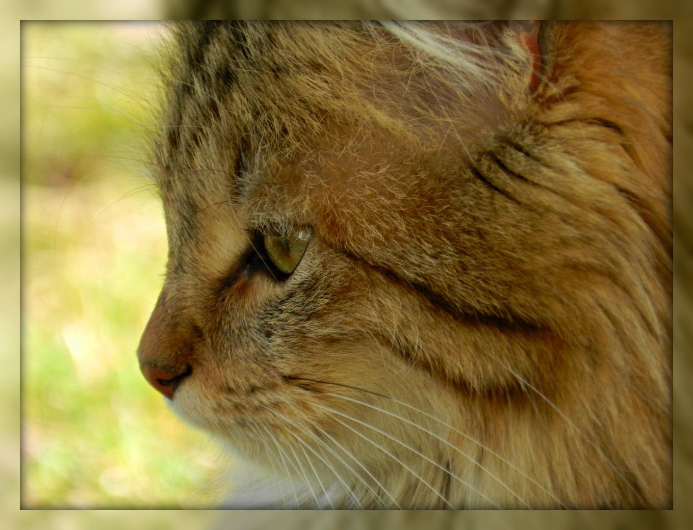 Nachbars Katze *Stellina*