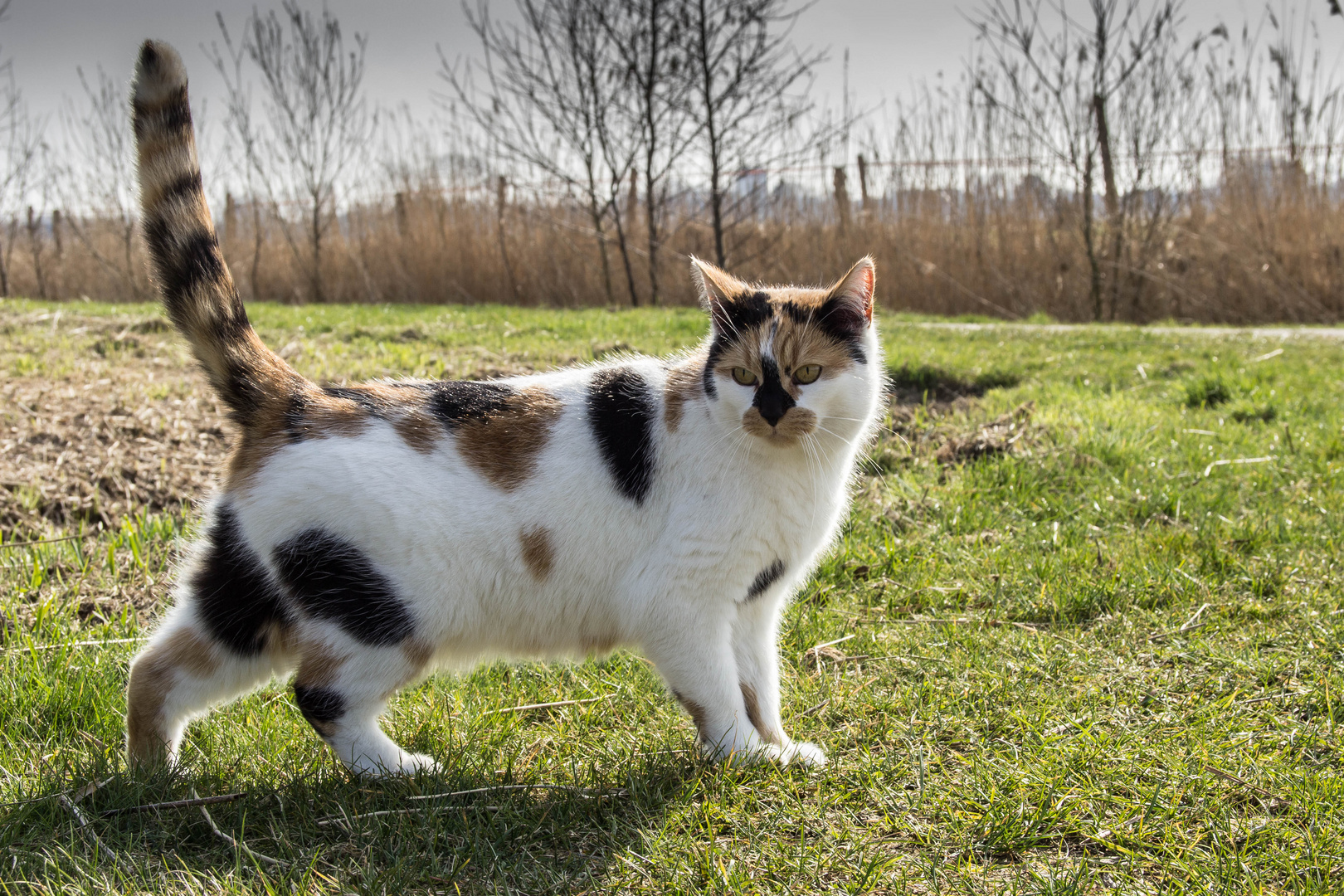 Nachbars (Schmuse)Katze
