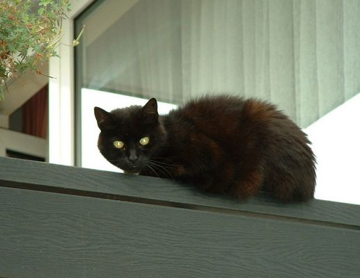 Nachbars schwarze Katze
