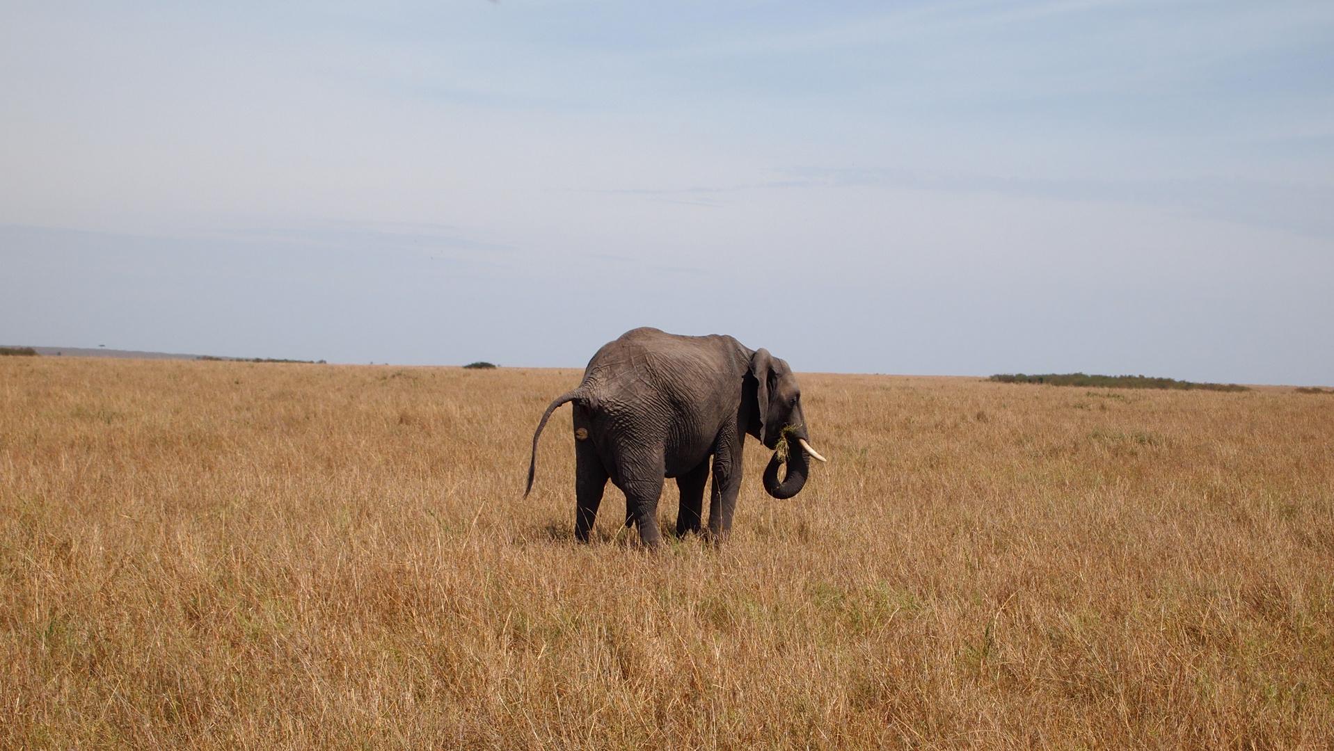 Nachdenklicher Elefant